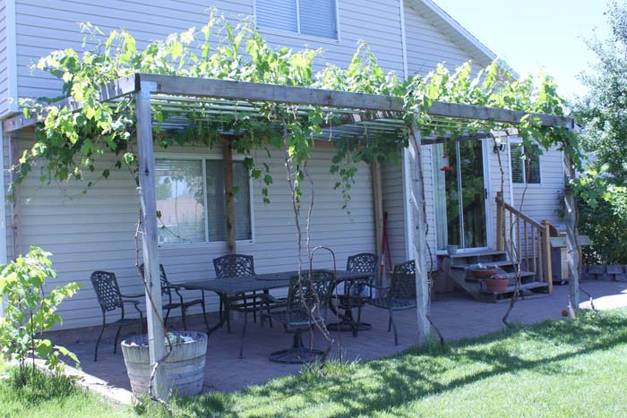 Навес для винограда